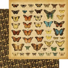 4500432 Papier Graphic45-Olde Curiosity Shoppe Collection - 30,5x30,5cm- Butterfly Specifics