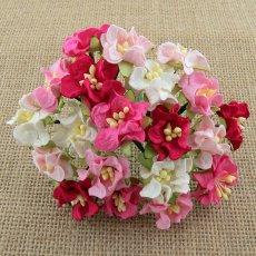 SAA-419 Miniatukowe gardenie różowe mix 5 szt