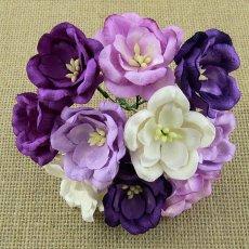 SAA-422 Magnolie fioletowe mix lilac purple 5 szt